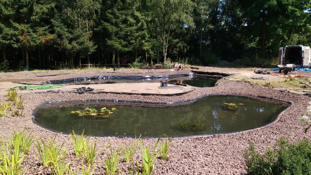 F zwemvijver met natuurlijk plantenfilter in prinsenbeek door