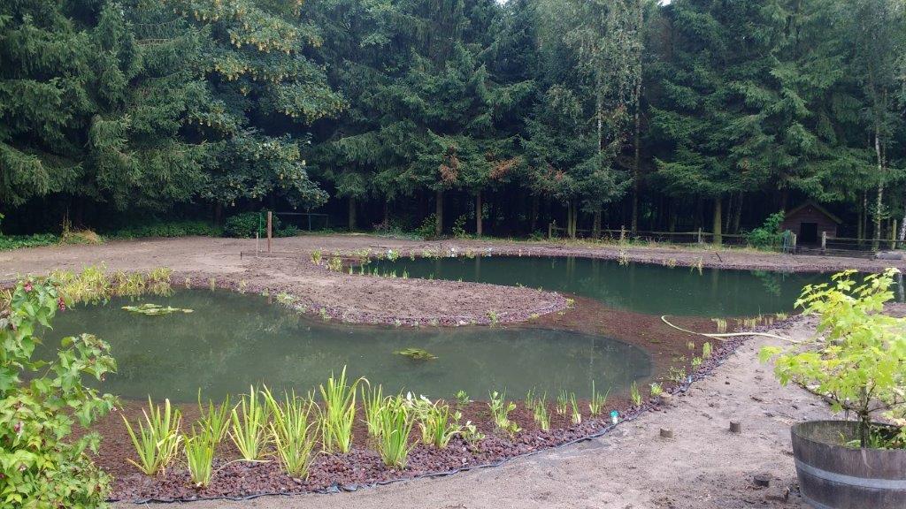 H zwemvijver met helofytenfilter in prinsenbeek regio breda door